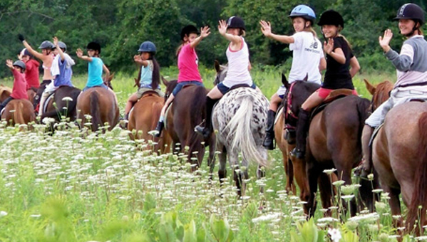 Horse Riding and learn English in Dublin